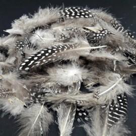 PIÓRKA perliczki ozdobne kropk 6-10 cm